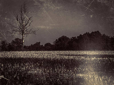 Mais Photograph - Summer's End by Michele Mule