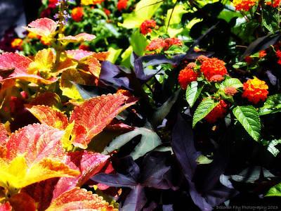 Summers Floral Colors Art Print by Deborah Fay