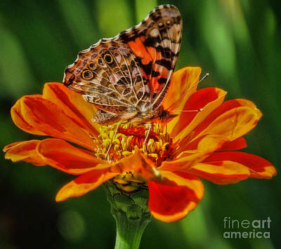 Photograph - Summers Last Butterfly by Elizabeth Winter