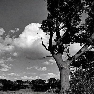 Music Wall Art - Photograph - Summertime & Easy Living. Clouds & Tree by Manuela Kohl