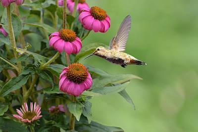 Garden Photograph - Summertime Hummer by Lynn Bauer