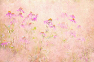 Floral Abstract Photograph - Summertime by Jacky Parker