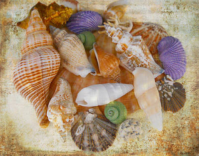 Photograph - Summertime Relics by Judy Hall-Folde