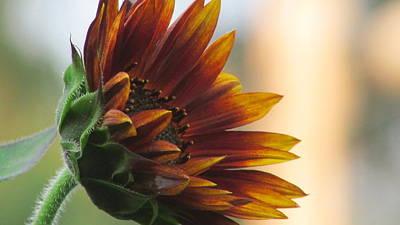Summertime Sunflower Art Print by Debra Madonna