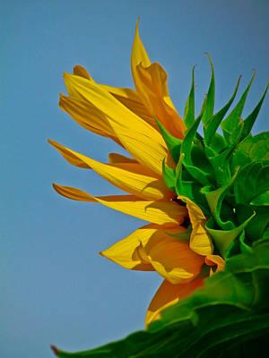 Photograph - Summery Sunflower by Eva Kondzialkiewicz