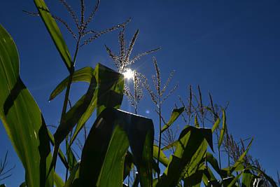 Sun Above The Corn  Art Print by Lyle Crump