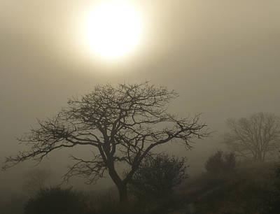 Sun And Fog Art Print