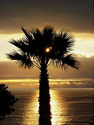 Sun And Palm And Sea Art Print