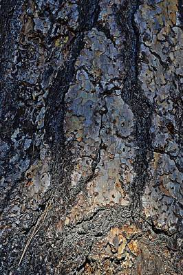 Photograph - Sun Bark by Randal Bruck
