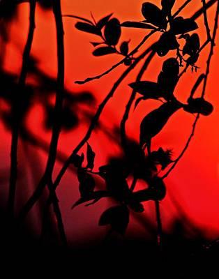 Photograph - Sun Bathed Leaves by Tara Lowry