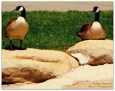 Photograph - Sun Bathers by Bobbee Rickard