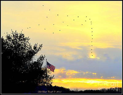 Photograph - Sun Birds by Deb Badt-Covell
