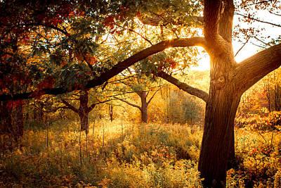 Photograph - Sun Burst by Milan Kalkan