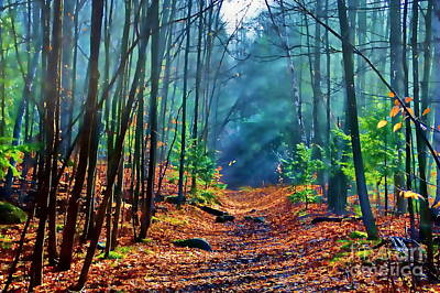 Photograph - Sun Dappled Forest by Andrea Kollo