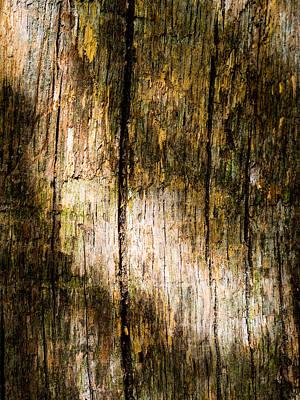 Unique Photograph - Sun-dappled Weathered Bark by Hakon Soreide