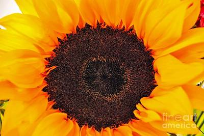 Photograph - Sun Delight by Angela J Wright