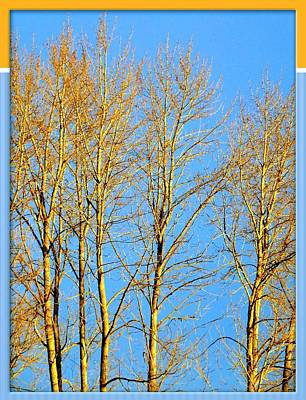 Sun- Drenched Cottonwoods Art Print by Will Borden