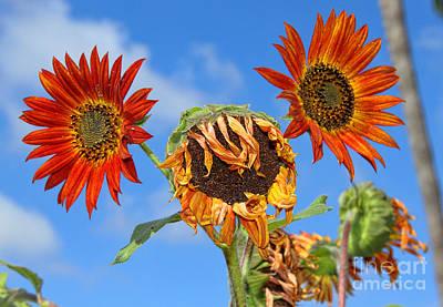 Photograph - Sun Drenched In Autumn By Diana Sainz by Diana Raquel Sainz