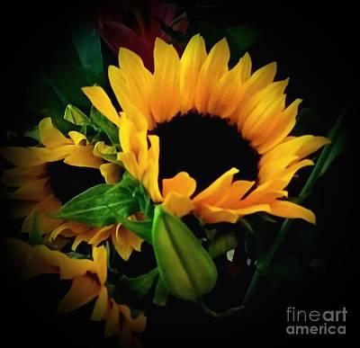 Photograph - Sun Flower 2 by Rose Wang