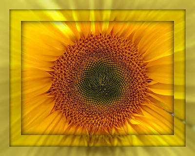 Photograph - Sun Flower Dream by John Shiron