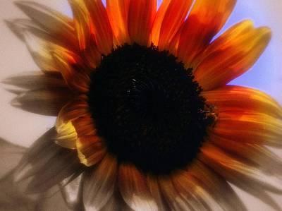Sun Flower Art Print by Karen Kersey