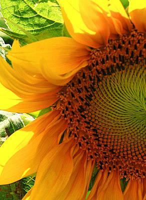 Sun Flower Original