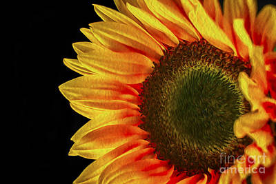 Photograph - Sun Flower Oil by David Haskett II