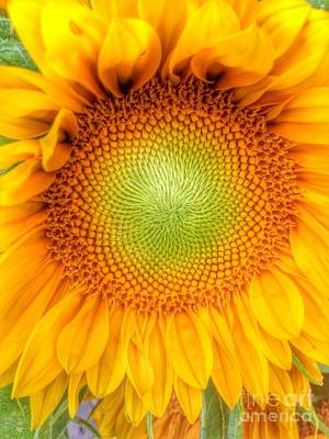 Photograph - Sun Flower Power by Susan Garren