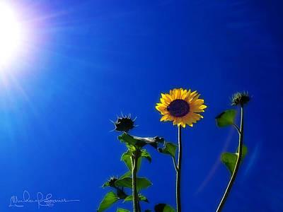 Photograph - Sun Flower Sunning by Michael Soaries