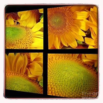 Photograph - Sun Flower Window  by Susan Garren