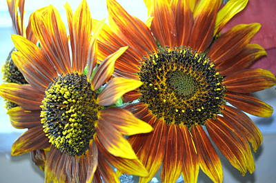 Photograph - Sun Flowers by Ronald T Williams