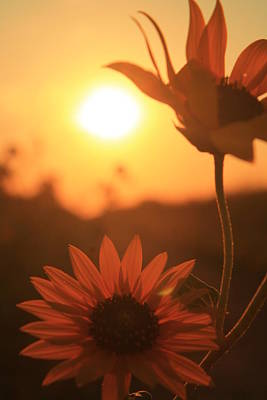 Photograph - Sun Glow by Alicia Knust