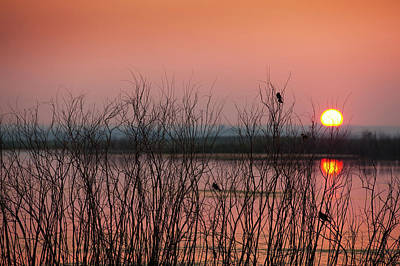 Sun Glowing In A Pink Sky At Sunset Art Print by Greg Huszar