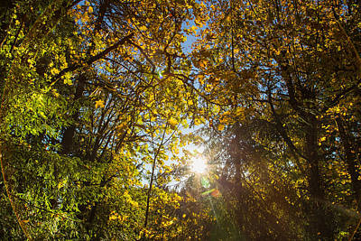 Photograph - Sun Greets The Trees by Kunal Mehra