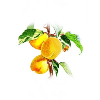 Apricot Painting - Sun Kissed Apricots by Irina Sztukowski