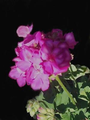 Sun Kissed Geranium  Art Print by Christine Fournier