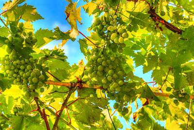 Sun Kissed Green Grapes Art Print by Eti Reid