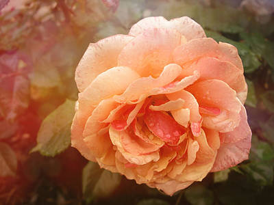 Photograph - Sun Kissed Rose by Stephanie Hollingsworth