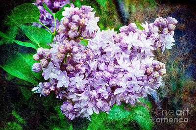 Photograph - Sun Lit Lilac The Sweet Sign Of Spring by Andee Design