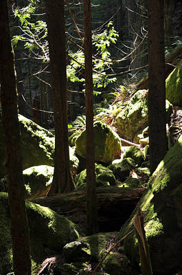 Photograph - Sun On Moss by Kirt Tisdale