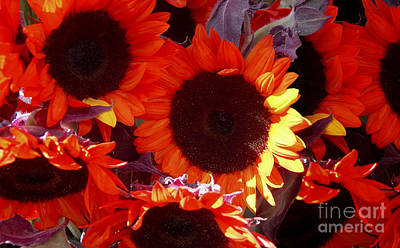 Photograph - Sun On The Flowers by Susan Parish