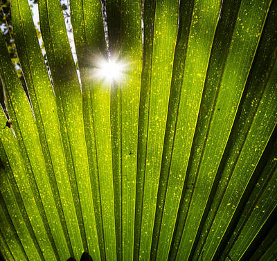 Photograph - Sun Palm by Mark Andrew Thomas