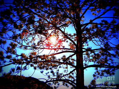 Photograph - Sun Peeking Through by Bobbee Rickard