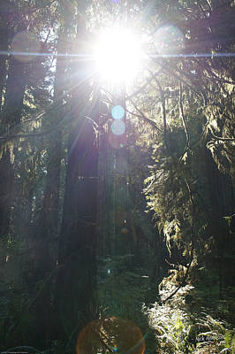 Photograph - Sun Penetrates The Redwood Forest by Mick Anderson