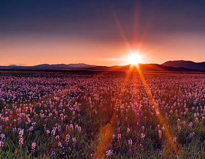 Sun Rays And Wildflowers Print by Leland D Howard