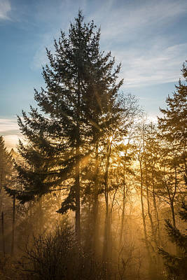 Photograph - Sun Rays In A Magical Forest by Pierre Leclerc Photography