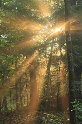 Photograph - Sun Rays In Misty Hemlock Forest by John Burk