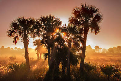 Photograph - Sun Rays Through Palmettos Merritt Island  by Karen Stephenson