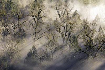 Sun Photograph - Sun Rays Through The Morning Mist by David Gn
