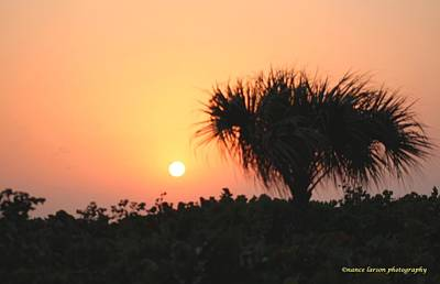 Photograph - Sun Rise And Palm Tree by Nance Larson
